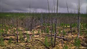 reforestation-2